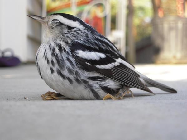 Bird: 10