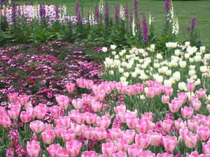 Longwood Gardens: 55