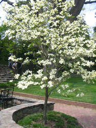 Longwood Gardens: 58