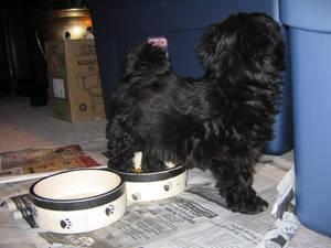 Dog: 12