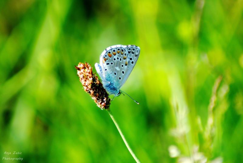 Blu butterfly by LeeLooAnja