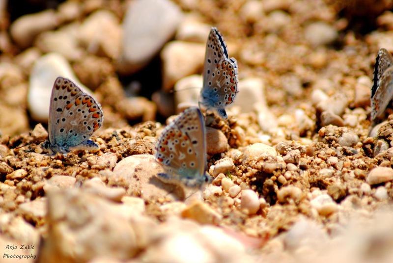 Butterflies by LeeLooAnja