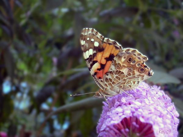 2009 Butterfly Effect