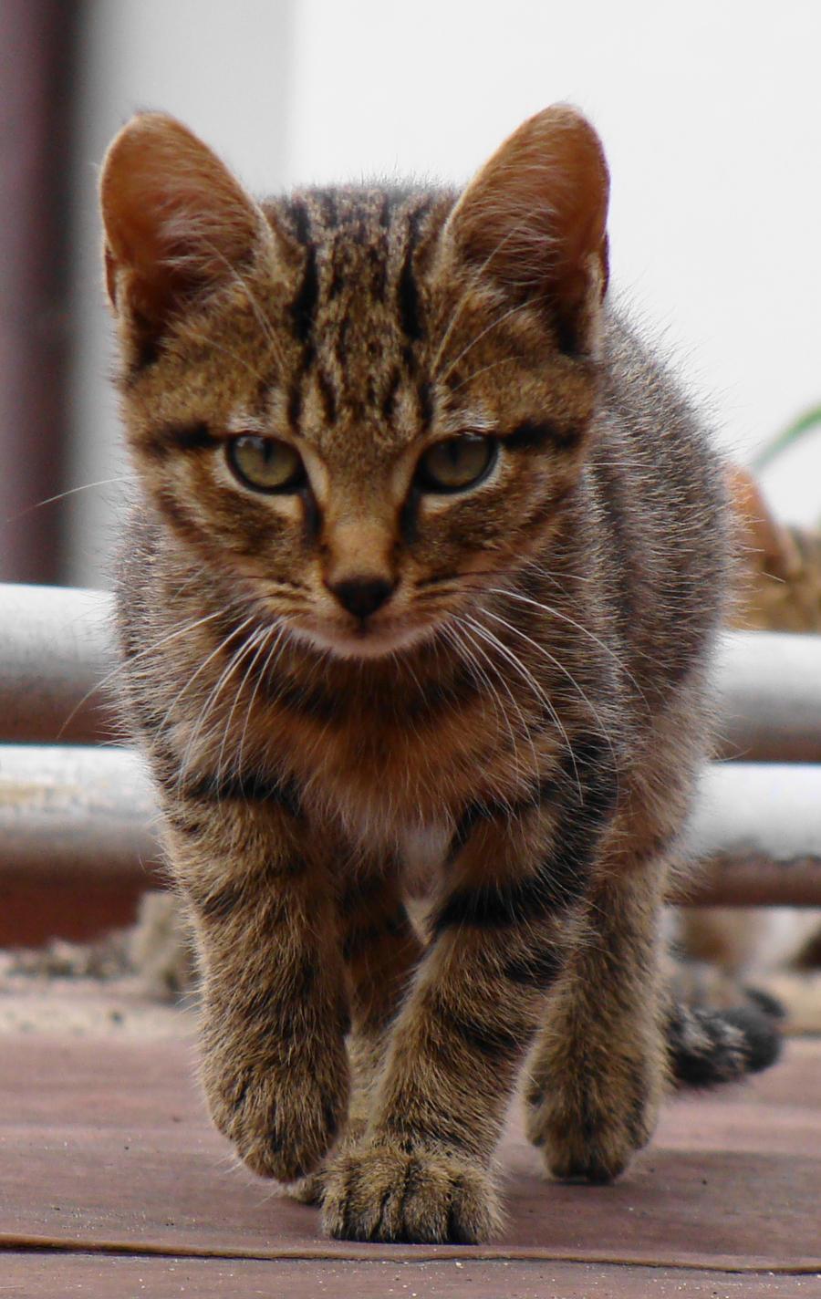 kitty by malaladanila