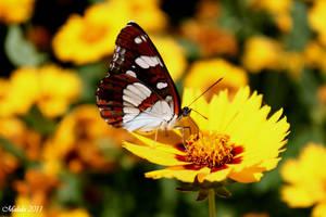 Butterfly by malaladanila