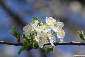 Spring by malaladanila