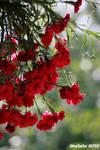 Spring time33 by malaladanila