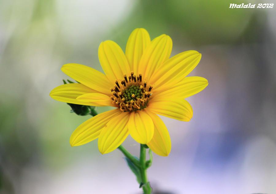 Happy September2 by malaladanila