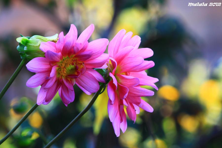 Floral1 by malaladanila