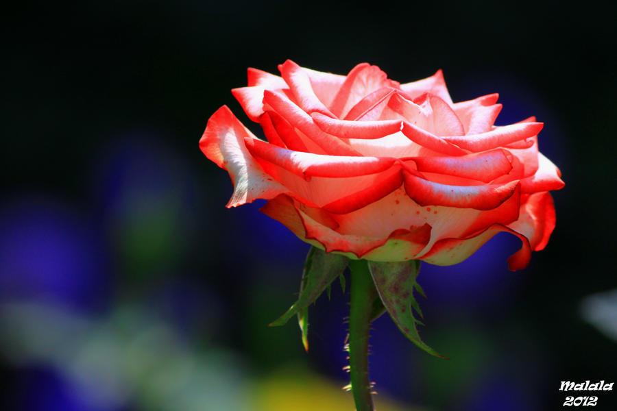 Artflower love by malaladanila