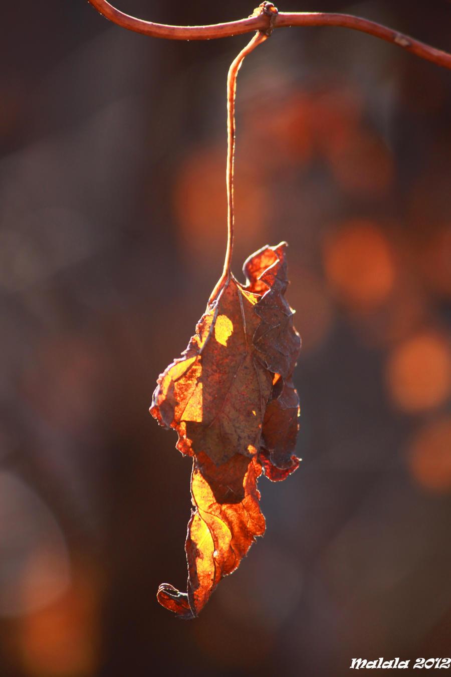Magic fall15 by malaladanila