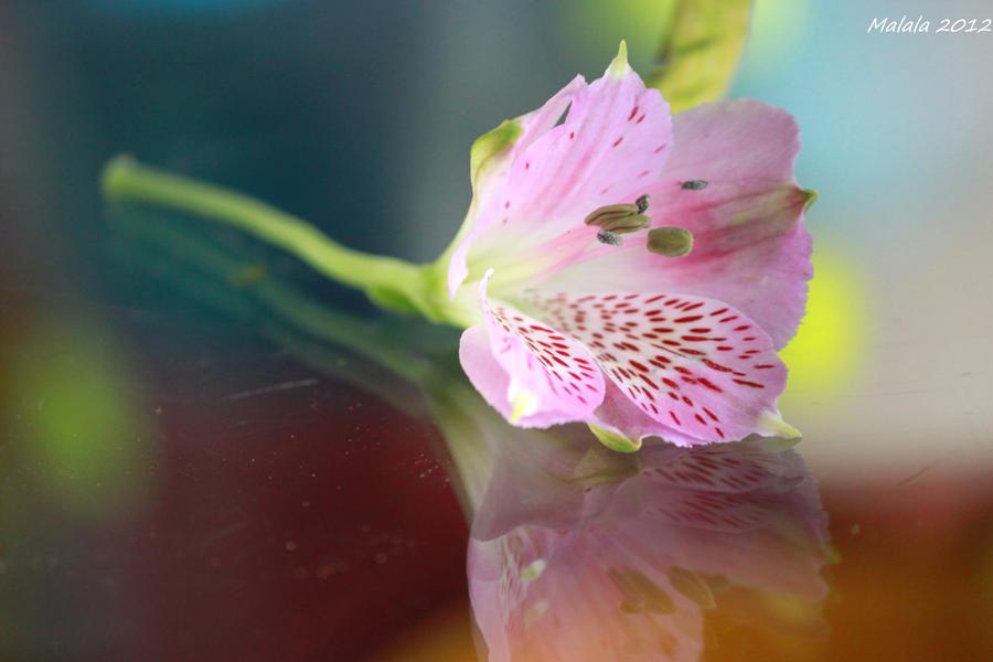 Artflower by malaladanila