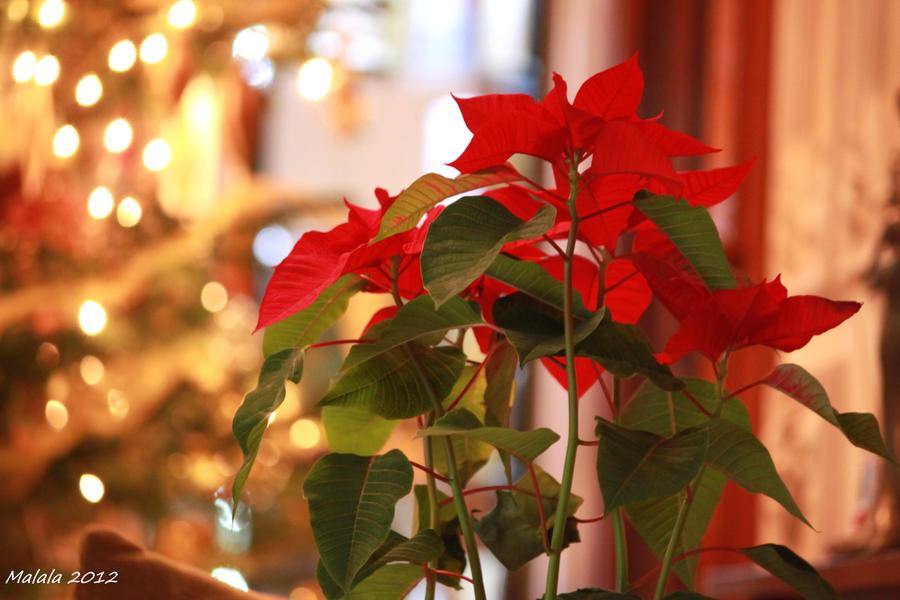 Merry Christmas by malaladanila