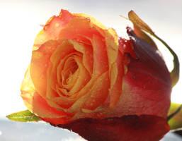 Artflower-dorinta