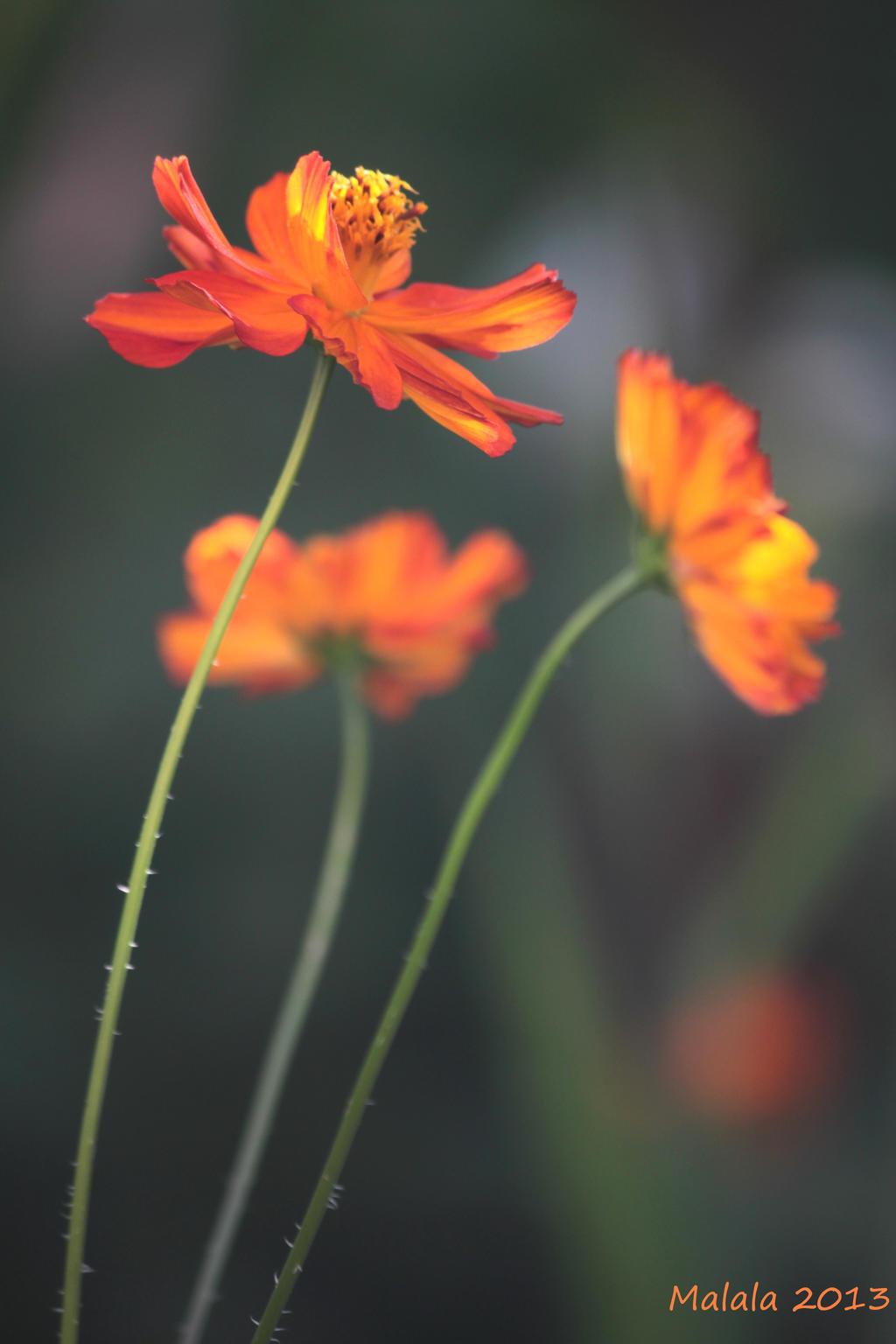 Parfumul culorilor by malaladanila