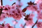 Spring time10