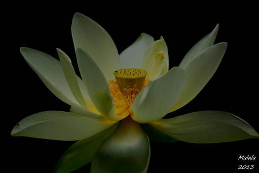 Simphony of flower