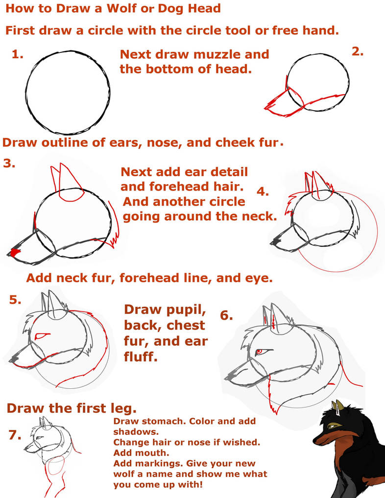 How to Draw a wolf or Dog head by Tigerstarwolf on DeviantArt