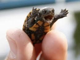 turtle by stellasaurassock