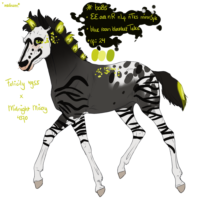6085 Padro Foal Design by sandym918