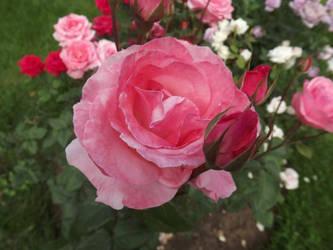 My flower by strangelove46
