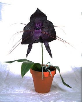 Monster Orchid