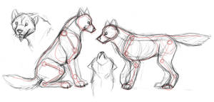 wolf anatomy studies