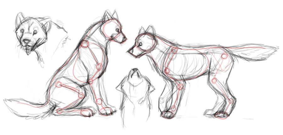 Wolf Anatomy Studies By Autumnalone On DeviantArt