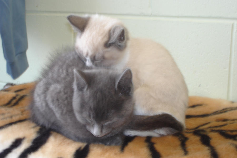 2 kittens different angle