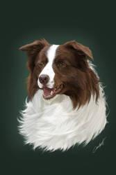 'Max' the wonder dog