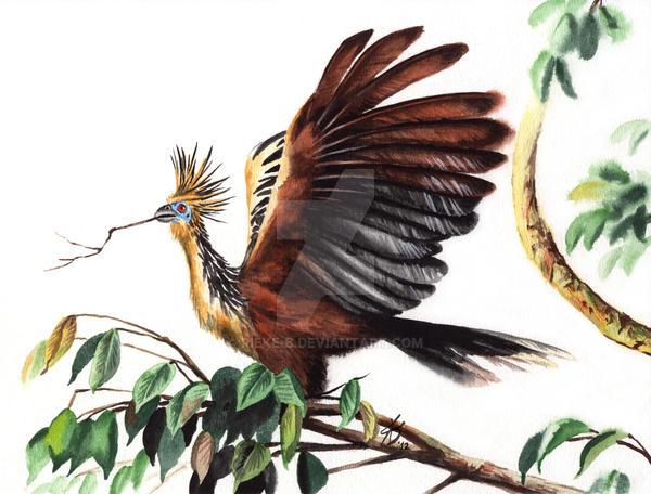 World of Birds 4 - Hoatzin by rieke-b