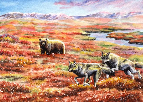 Free Tundra by rieke-b