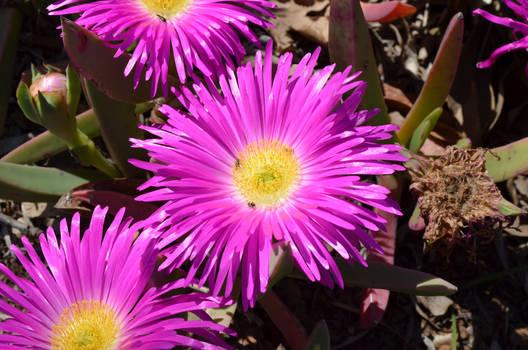 Giant Purple Flower