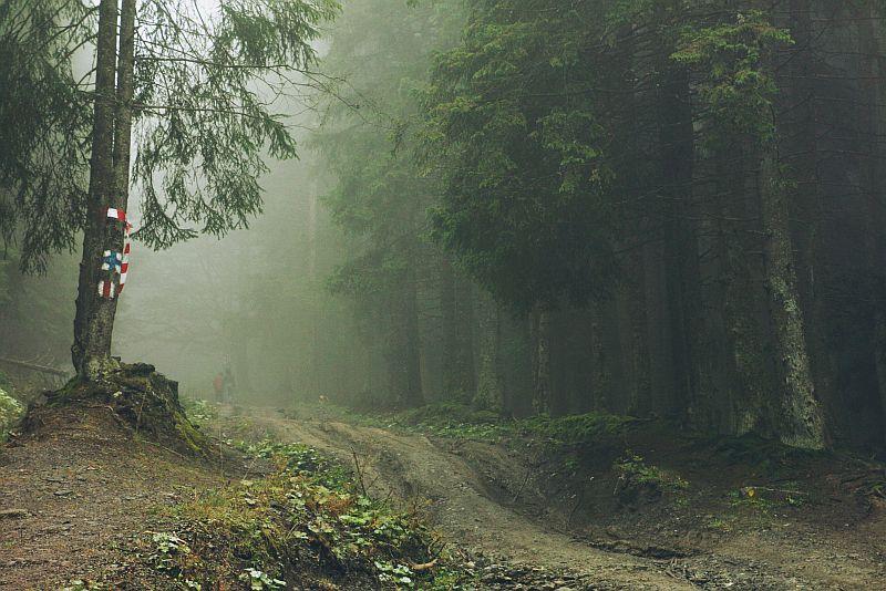 Fog Everywhere by andreea-blas
