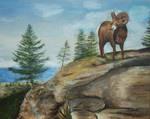 Mountain Goat British Columbia by Schnellart
