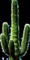 Stock Cactus PNG