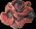 Dead Rose PNG
