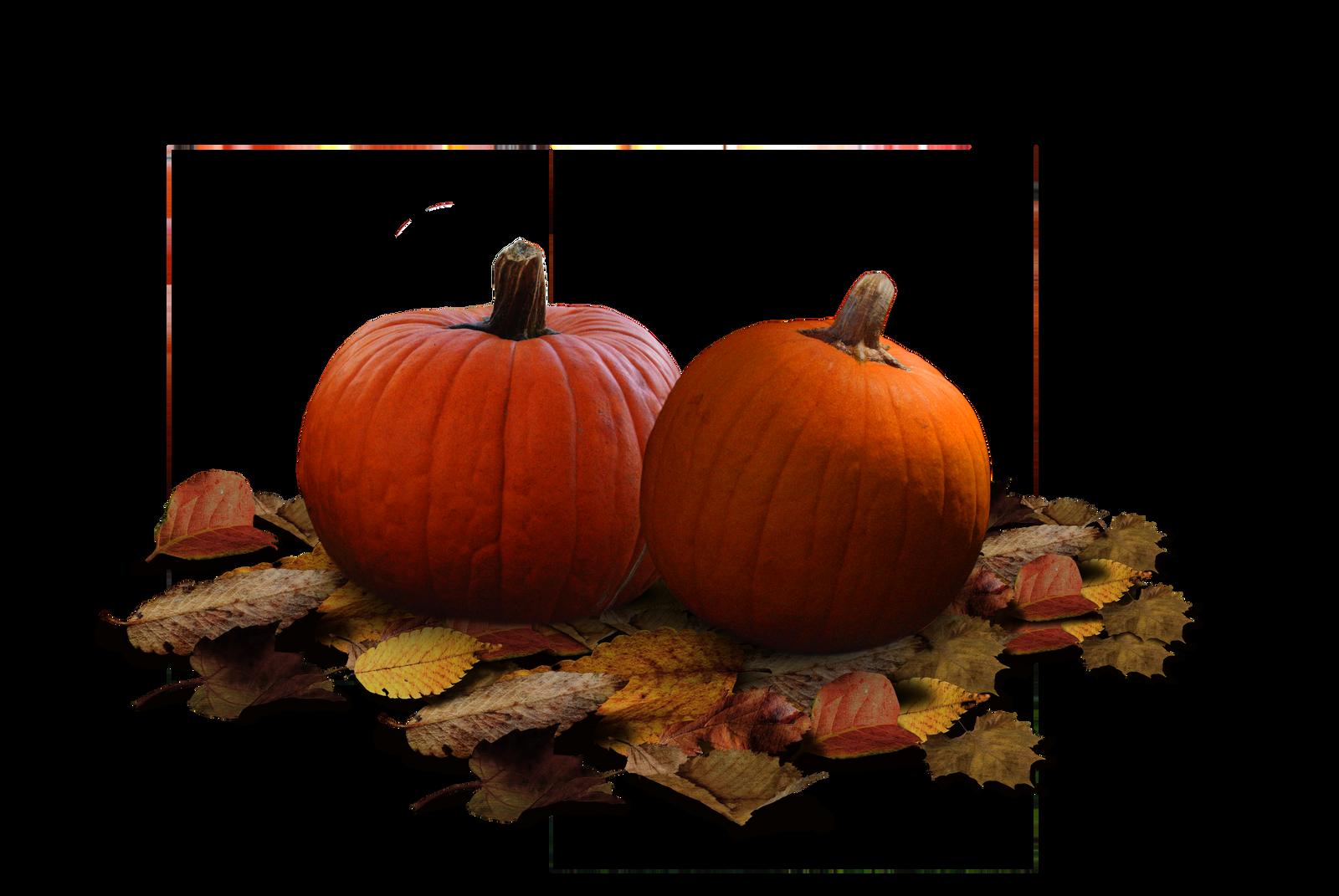 Pumpkin Patch Stock PNG by KarahRobinson-Art