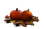 Pumpkin Patch Stock PNG