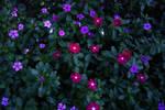 Beautiful Flower Background Texture
