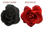 Lovely Roses     Png Stock