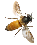 BEE PNG STOCK