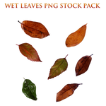 Wet Leaves Png Stock Pack