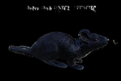 Rat PNG STOCK