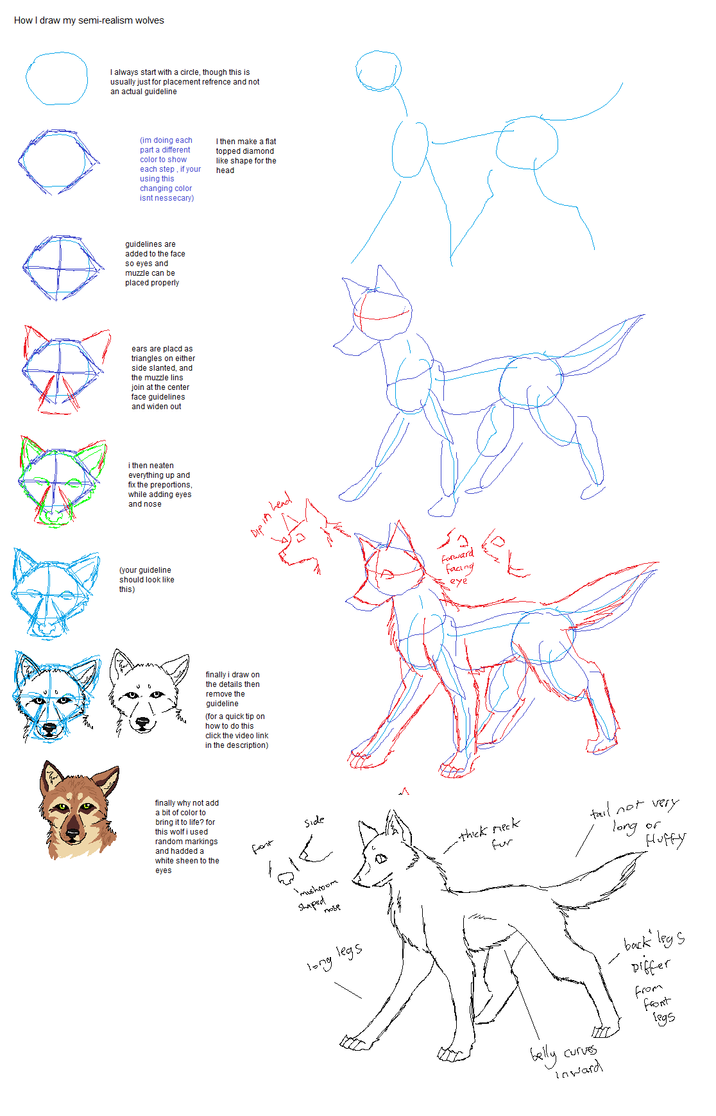 how to draw wolf legs