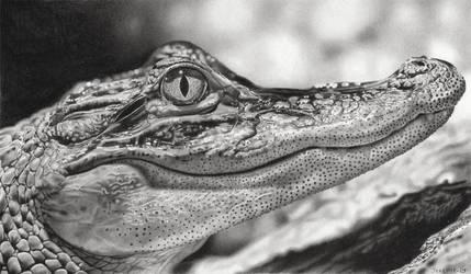 Crocodile by Jeremie-Dessin