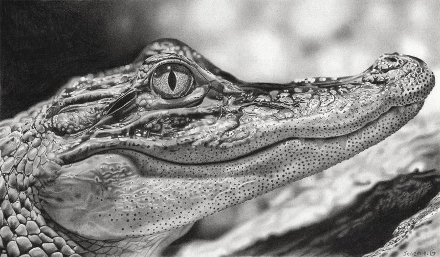 Crocodile by jeremie dessin on deviantart - Image crocodile dessin ...