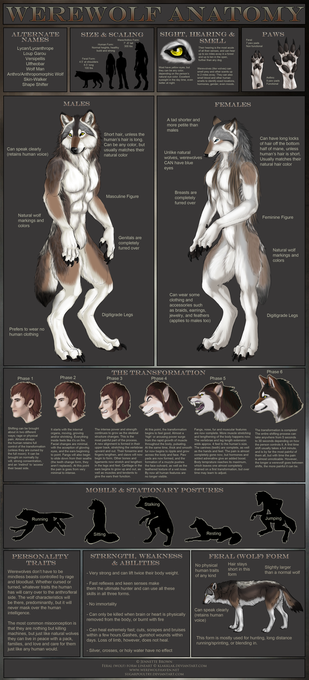 Werewolf Anatomy by sugarpoultry