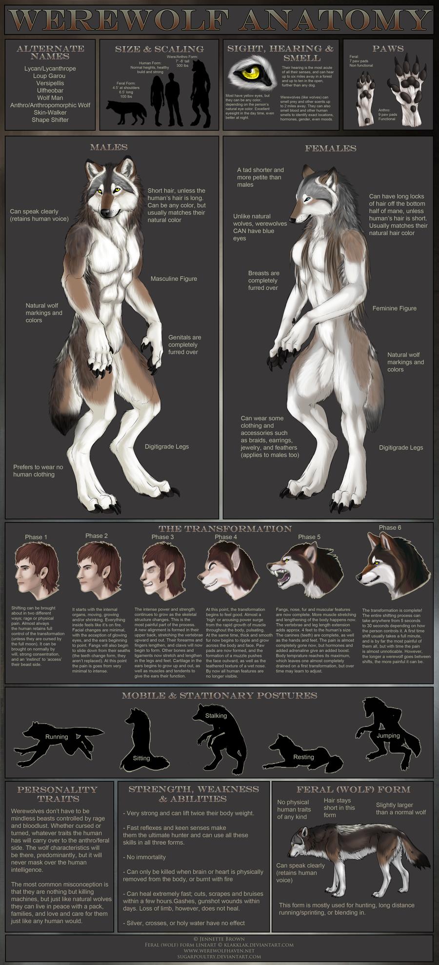 Werewolf Anatomy by sugarpoultry