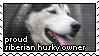 Proud Siberian Husky Owner